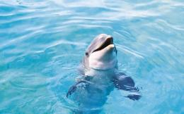 Cute Dolphin Wallpaper 1074 1920 x 1200WallpaperLayer com 789