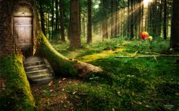 Enchanted Forest Wallpapers | HD Wallpapers 1077