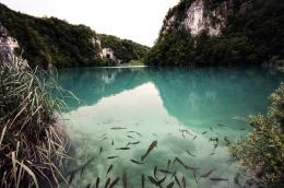 Nature, lake, fish, mountain, forest wallpapersphotos, pictures 1306