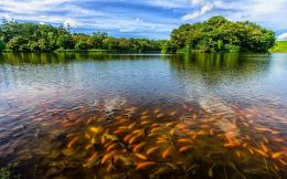 Download Fish in the lake wallpaper 730