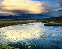 Floating Leaves Owens Valley California Hd Wallpaper | Wallpaper List 1037