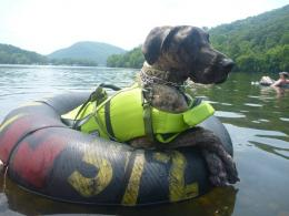 My Great Dane, just floating down the river in a tubei imgur com 852