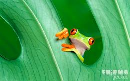 Pin Wallpaper Gecko A Tree Eyes Wallpaperistnet on Pinterest 1126