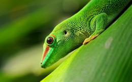 The eye of the gecko 1920x1200 wallpaper download page 651713 1105