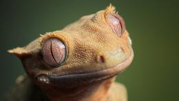Wallpapers de reptilesFondos de reptiles 970