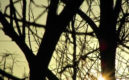 this tree but sun shinig through it, 2012 free download wallpapers 868