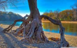 gnarled tree root by the river hdr wallpaper tags roots tree river 1647