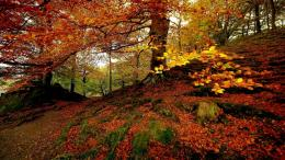 Autumn Colours Autumnal Forest Colors Golden Nature Seasons1366x768 1901
