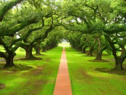 Beautiful nature wallpaper: Green nature wallpaper 783
