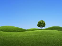 tree on a green hill 3d wallpaper 1438