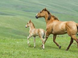 Horse And Foal On Meadow WallpaperDownload Wallpaper Nature Free 1771