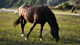 Brown horse on the meadow wallpaperAnimal wallpapers#48468 1554