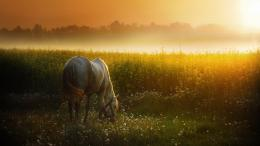 2560x1440 Sunset Meadow & White Horse desktop PC and Mac wallpaper 1333