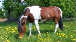 Horse on the meadow wallpaper 1526