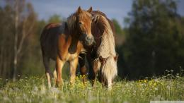 Horse In Meadow Wallpaper 1920x1080 Horse, In, Meadow 490