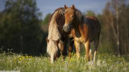 Horse in the meadow tree grass green wallpaper 558