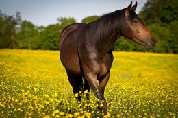 Horse meadow flowers wallpaper | 1920x1276 | 112529 | WallpaperUP 694