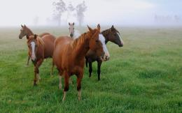 wallpaper of four horses in the meadow with lots of grass   HD horses 862