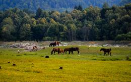 Download Brown horses grazing on the meadow wallpaper 1616