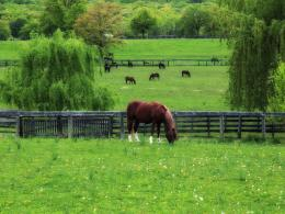 Animals Horses Horses on a meadow 036168jpg 225