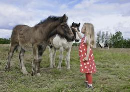 download girl horses on the meadow wallpaper tags horses meadow 1647