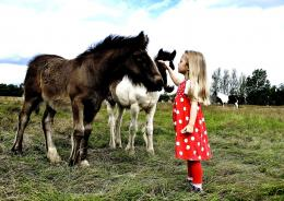 Girl And Horses On The Meadow Animals hd wallpaper #1188076 1417