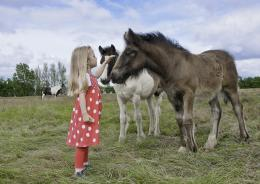 Girl And Horses On The Meadow Animals hd wallpaper #1188076 617