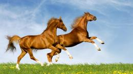 wild horses running in the meadow widescreen high resolution wallpaper 215