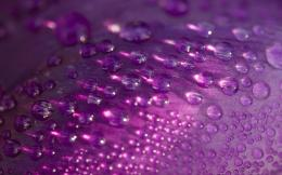 petal purple drops background beautifulWallpaper Computer 9763 high 442