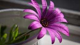 Flower, Purple, Glass, Petals WallpaperMixHD wallpapers 1034