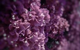 flowers petals leaves purple macro close up wallpaper background 1340