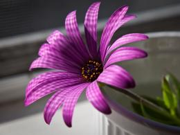 Description: The Wallpaper above is Flower Purple Petals Wallpaper in 982