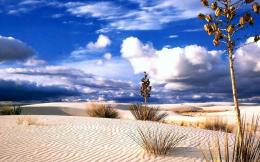 Desert landscape hdr trees popular sand sky wallpaper 641