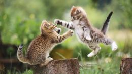 Cat Fight Hd Wallpaper | Wallpaper List 1729