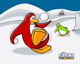 Club Penguin images A funny snowball fight HD wallpaper and background 1013