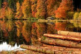 Trees Forest House Logs Lake Reflection autumn wallpaper | 1900x1267 862
