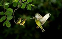 Beautiful Birds Wallpapers & Pictures | Live HD Wallpaper HQ Pictures 1497
