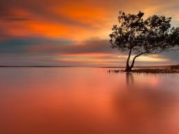 Download Lonely tree in peaceful sunset wallpaper in Nature wallpapers 844