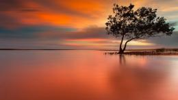 Download Lonely tree in peaceful sunset wallpaper in Nature wallpapers 241