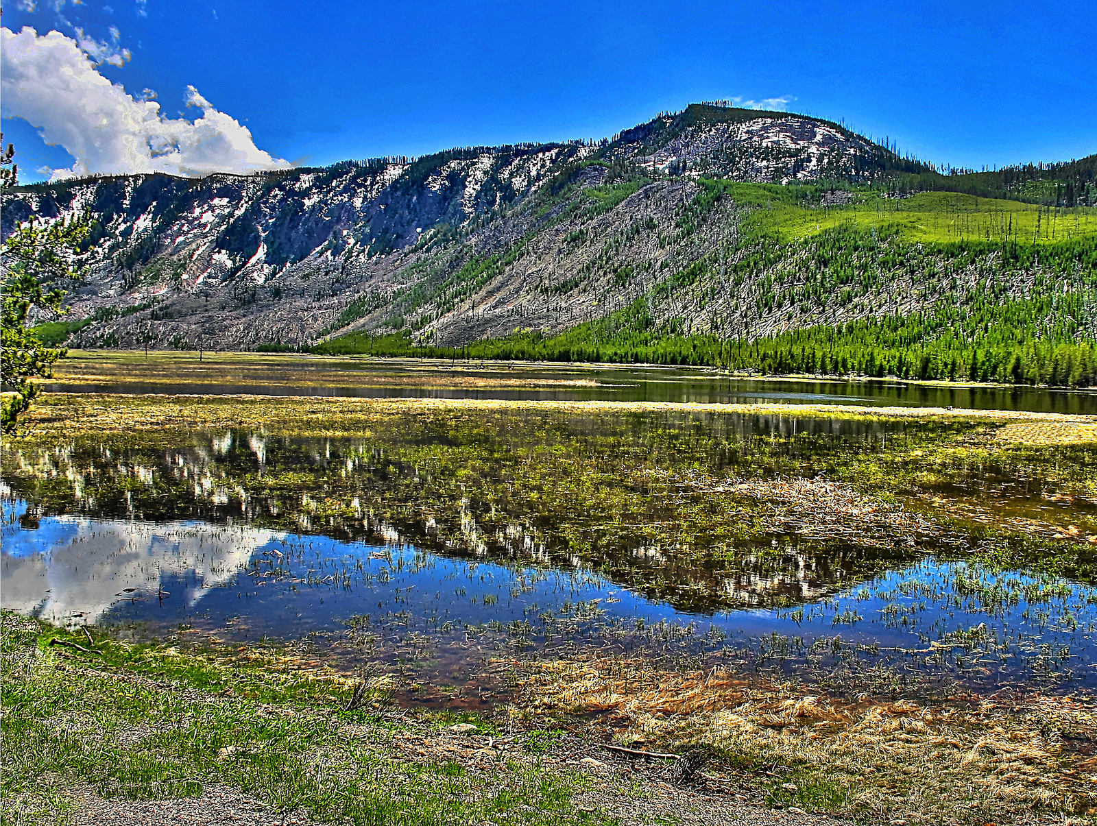 Fly Fishing In Yellowstone National Park: Just For Fun 1553