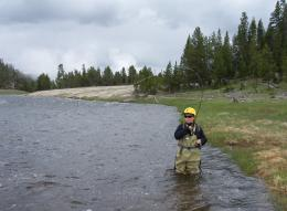Fly Fishing In Yellowstone National Park Pictures to like or share on 515