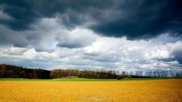 download mean skies over golden field wallpaper in nature wallpapers 566