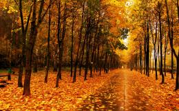 Download Wallpaper autumn, park, the avenue, trees, path, tile, wet HD 378