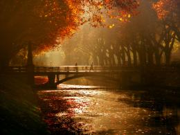 Royal avenue bridge canal trees autumn mood wallpaper background 314