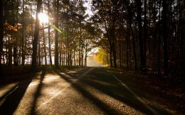 Download Wallpaper Avenue, Park, Trees, Autumn, Sun, Light, Asphalt 721