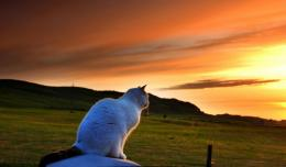 Kitty Sitting On The Fence In Sunset Hd Wallpaper | Wallpaper List 1013