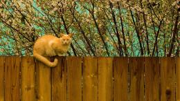 on fence HD wallpaper 2560x1600 Cat on fence 2560x1440 Cat on fence 1701