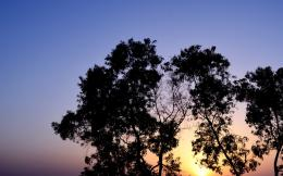 Download Tree Dusk HD Wallpaper | Wallpicshd 267