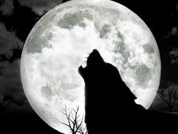 Moon And Wolf Hd Wallpaper | Wallpaper List 978