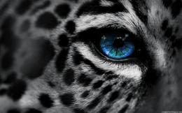 Eye of The Tiger | High Definition Wallpapers, High Definition 673